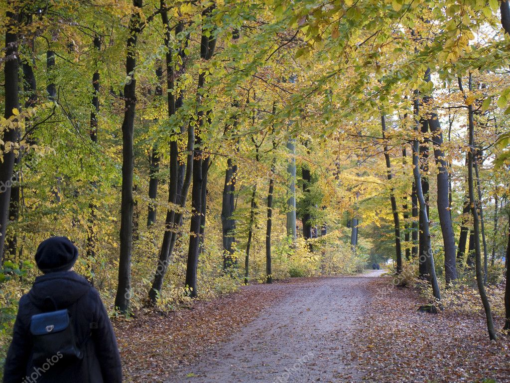 Senior autumn walk in the wood - Denmark. — Stock Photo #6573868