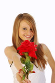 A red rose for you — Stockfoto