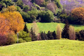 Hilly landscape with vegetation — Stock Photo