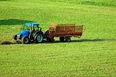 Saman hasat — Stok fotoğraf