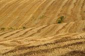 Venkovská krajina s pole, zelená a modrá obloha — Stock fotografie