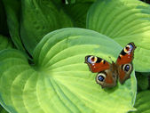 Butterfly on the leaf — Stockfoto