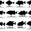 Royalty-Free Stock Photo: Fish collection vector silhouettes