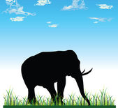 Elephant on grass vecotr silhouette — Stock Photo