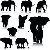 Elephant silhouettes — Stock Photo