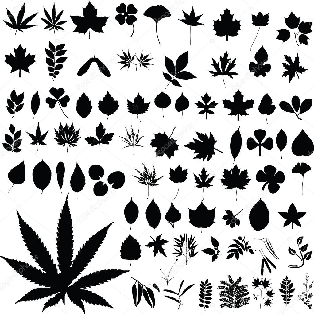 Marijuana plants vector silhouettes illustrations on a white  Stock Photo #6447344