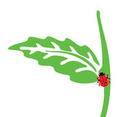 Leaves and ladybug on a white background — Stock Photo