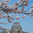 Cherry blossoms at Himeji castle - Stock Photo