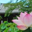 Lotus flower with temple — Foto Stock