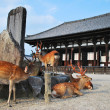 Deers flocking in front of temple — Stock Photo