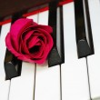 Closeup of rose on piano keyboard — Stock Photo