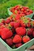 Fresh raw strawberries — Stock Photo