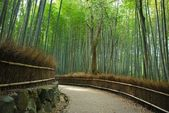 Serene path along a dense bamboo grove — Stock Photo