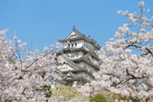 Cherry blossoms at Himeji castle — Stock Photo