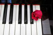 Vista superior de rose en el teclado — Foto de Stock