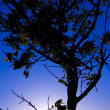 Tree on the blue sky — Stock Photo