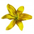 Stock Photo: Lilly flower