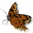 Butterfly — Stock Photo #5817837