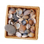 Seashell in basket — Stock Photo #5820936