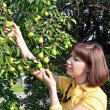 Stock Photo: Young woman harvesting green pear