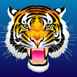 Stock Vector: Head of tiger