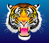 Head of tiger — Stock Vector