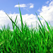 Stock Photo: Green grass and blue cloudy sky