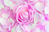 Rose flower among the petals — Stock Photo