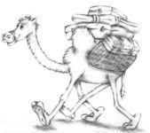 Camel, desert — Stock Photo