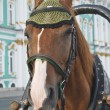 Muzzle of horse against Winter palace in St. Petersburg — Stock Photo