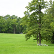 Green glade park in summer — Stock Photo