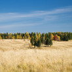 Beautiful autumn wood in Siberia — Stock Photo #5998152