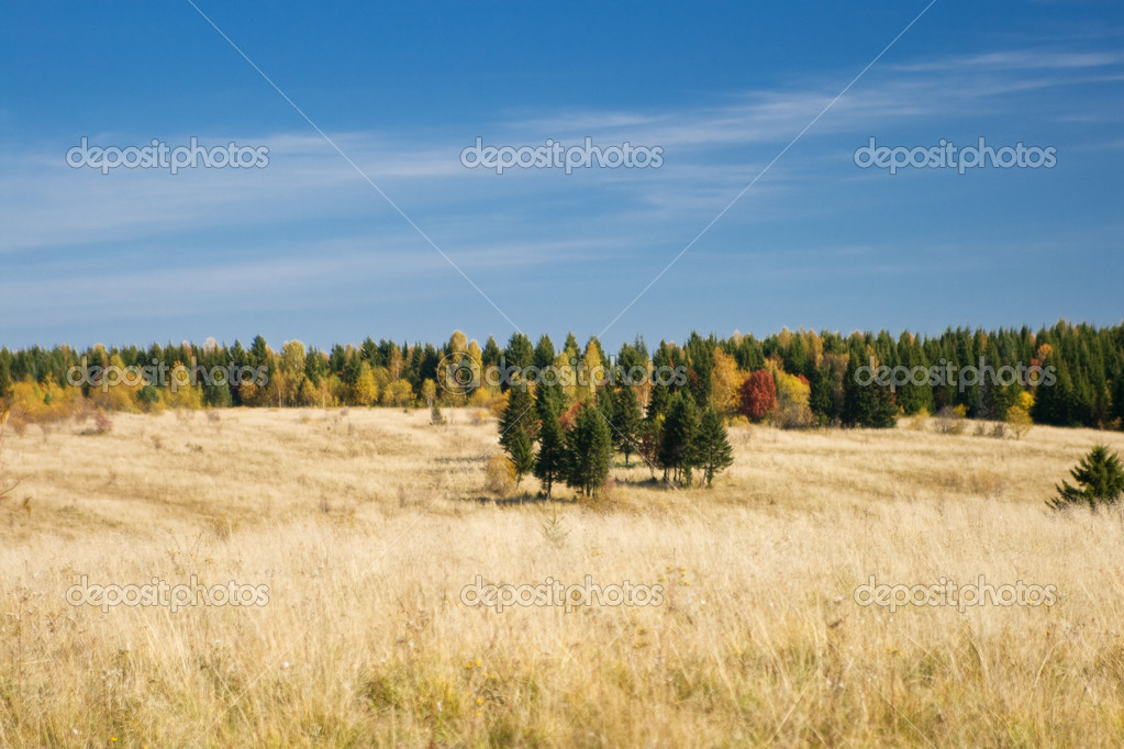 Wood and field during the autumn period — Stock Photo #5998152