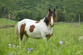 Lonely horse on a meadow in the shot center — Stock Photo