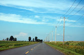 Power lines along a secondary road, corn crops — Stock Photo