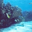 Bonaire Shallow reef - Stock fotografie