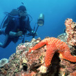 Diver and Starfish - Stock Photo