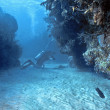 Diver in Roatan - Foto Stock