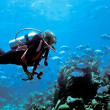Female scuba diver and Bermuda Chub — Stock Photo #5940553