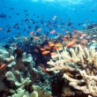 Indonesia Reef - Stock Photo