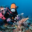 Female diver and lionfish — Stockfoto