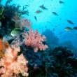 Maldive Shallow Reef — Stock Photo