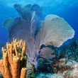 Colorful reef — Stock Photo #5940574