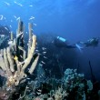 Roatan Reef — Stock Photo