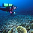 Stock Photo: Female Diver and Indo corals