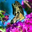 Springtime Butterfly — Stock Photo #5940606