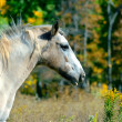 Horse in Autumn — Stock Photo