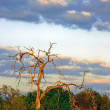 Kalahari at Dusk - Stock Photo