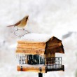 Winter Bird Feeder — Stock Photo #5940614