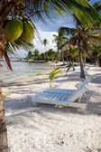 Coconut Chairs — Stock Photo